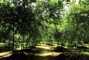 สถานีเกษตรปางดะ (2)