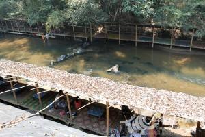 ปางช้างแม่วาง (1)