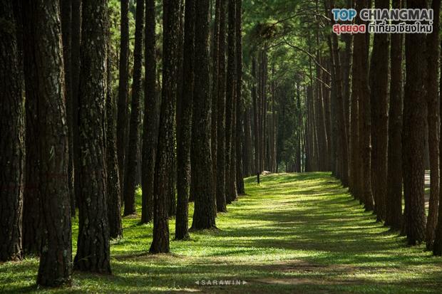 สวนสนบ่อแก้ว - ฮอด (11)
