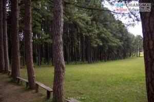 สวนสนบ่อแก้ว - ฮอด (2)