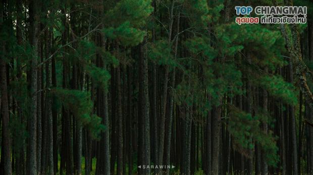 สวนสนบ่อแก้ว - ฮอด (22)