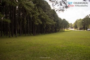 สวนสนบ่อแก้ว - ฮอด (3)