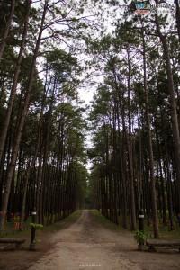 สวนสนบ่อแก้ว - ฮอด (5)
