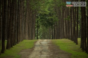 สวนสนบ่อแก้ว - ฮอด (6)