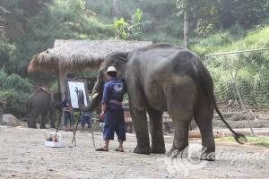 ปางช้างแม่สา (1)