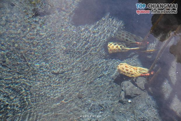 น้ำพุร้อนดอยสะเก็ด - ดอยสะเก็ด (11)