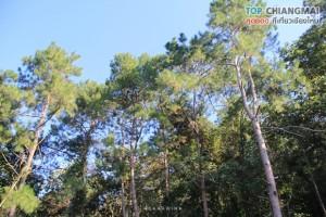 สวนพฤกษศาสตร์ - แม่ริม (24)