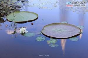 สวนพฤกษศาสตร์ - แม่ริม (32)