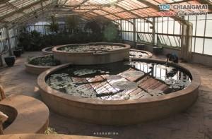 สวนพฤกษศาสตร์ - แม่ริม (34)