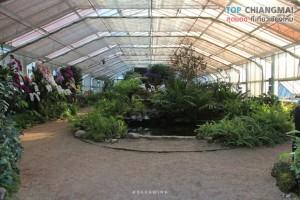 สวนพฤกษศาสตร์ - แม่ริม (35)