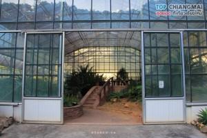 สวนพฤกษศาสตร์ - แม่ริม (41)