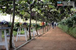 สวนอีเดน - แม่ริม (9)