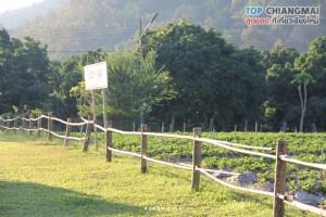 ไร่นภ ภูผา - สะเมิง (47)