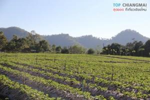 ไร่นภ ภูผา - สะเมิง (9)