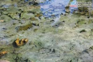 น้ำพุร้อนดอยสะเก็ด - ดอยสะเก็ด (12)