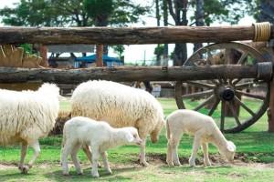Small Farm Chiang Mai - สมอลล์ฟาร์ม รีสอร์ท (17)