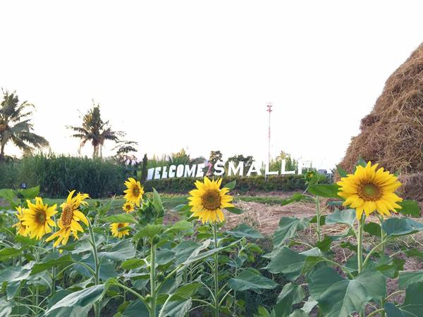 Small Farm Resort (24)