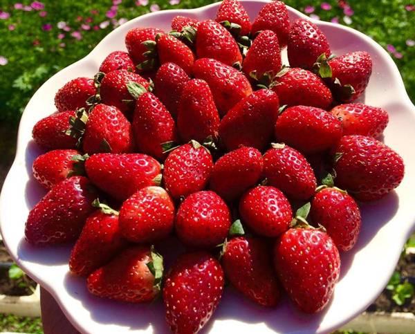 grand-berry-garden (12)