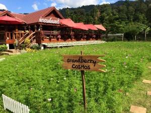 grand-berry-garden (7)