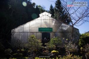 สถานีเกษตรดอยอ่างขาง (8)