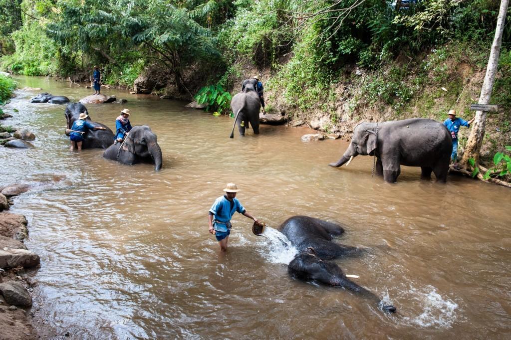 ปางช้างแม่ตะมาน