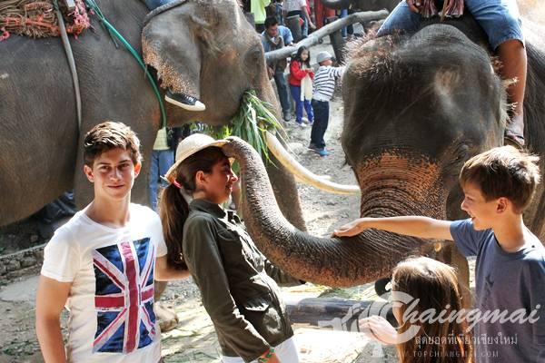 ปางช้างแม่สา (2)