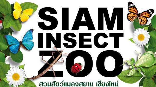 siam-insect-zoo