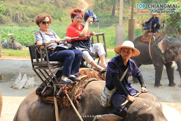 ปางช้างแม่แตง (16)