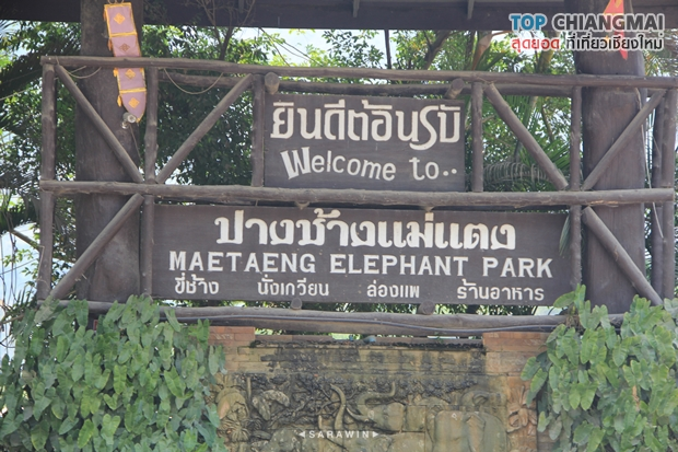 ปางช้างแม่แตง (2)