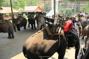 ปางช้างแม่แตง (20)
