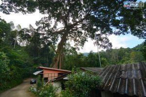 บ้านต้นไม้ แม่แมะ (60)