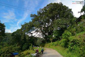 บ้านต้นไม้ แม่แมะ (71)