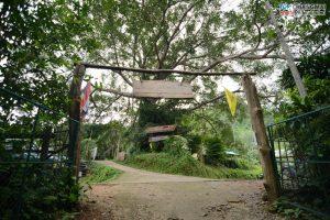 บ้านต้นไม้ แม่แมะ (40)