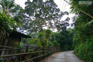 บ้านต้นไม้ แม่แมะ (68)