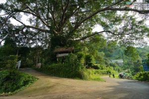 บ้านต้นไม้ แม่แมะ (73)