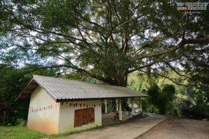 บ้านต้นไม้ แม่แมะ (79)