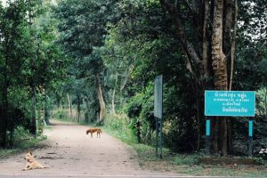 foresta-villa-chiangmai18