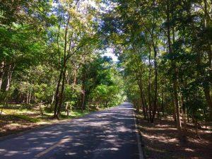 foresta-villa-chiangmai21
