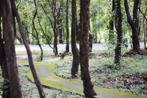 foresta-villa-chiangmai22