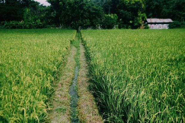 foresta-villa-chiangmai23