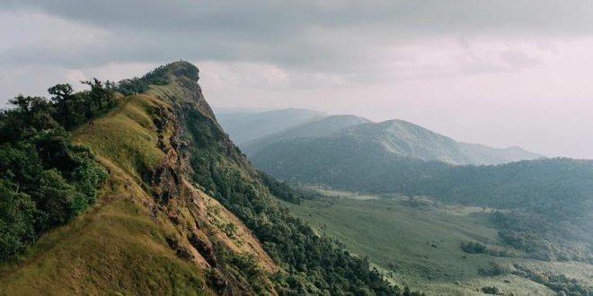 ม่อนจอง กุหลาบพันปีต้นใหญ่ที่สุด