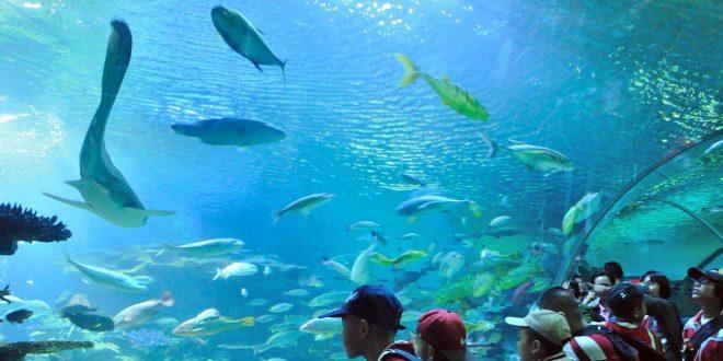 เที่ยวสวนสัตว์เชียงใหม่ ซู อะควาเรียม (The Chiang Mai Zoo Aquarium)